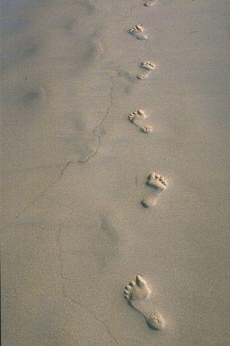 1footsteps.jpg