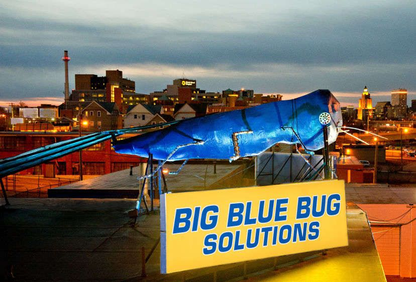 Big Blue Bug Solutions