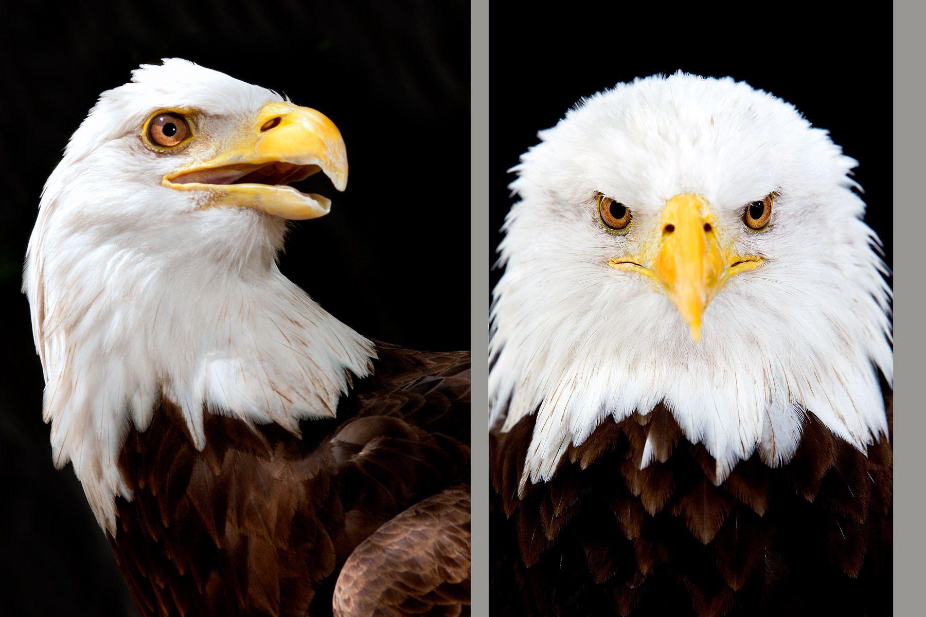 1raptors_birds_of_prey005.jpg