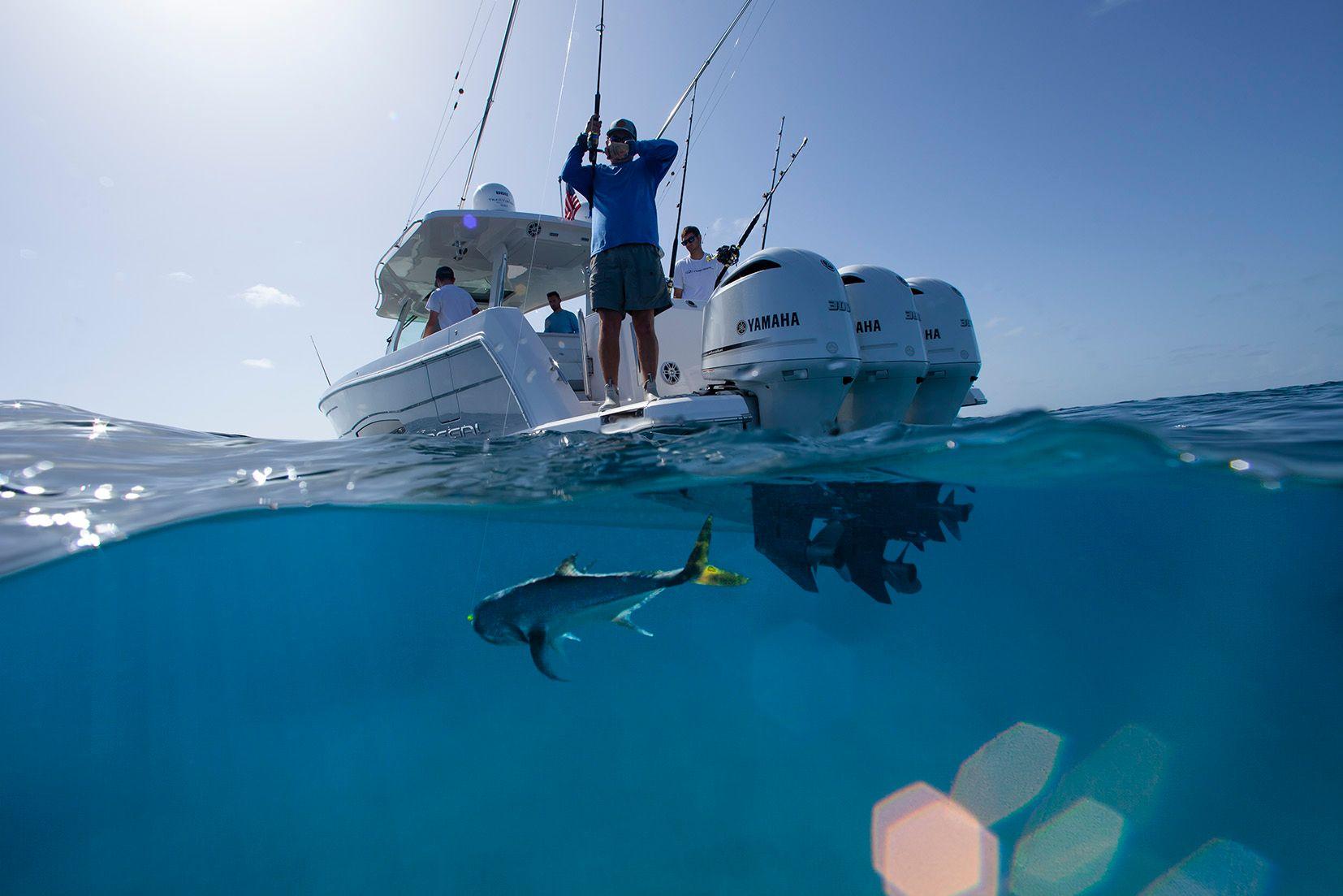 Bahamas Underwater Fish