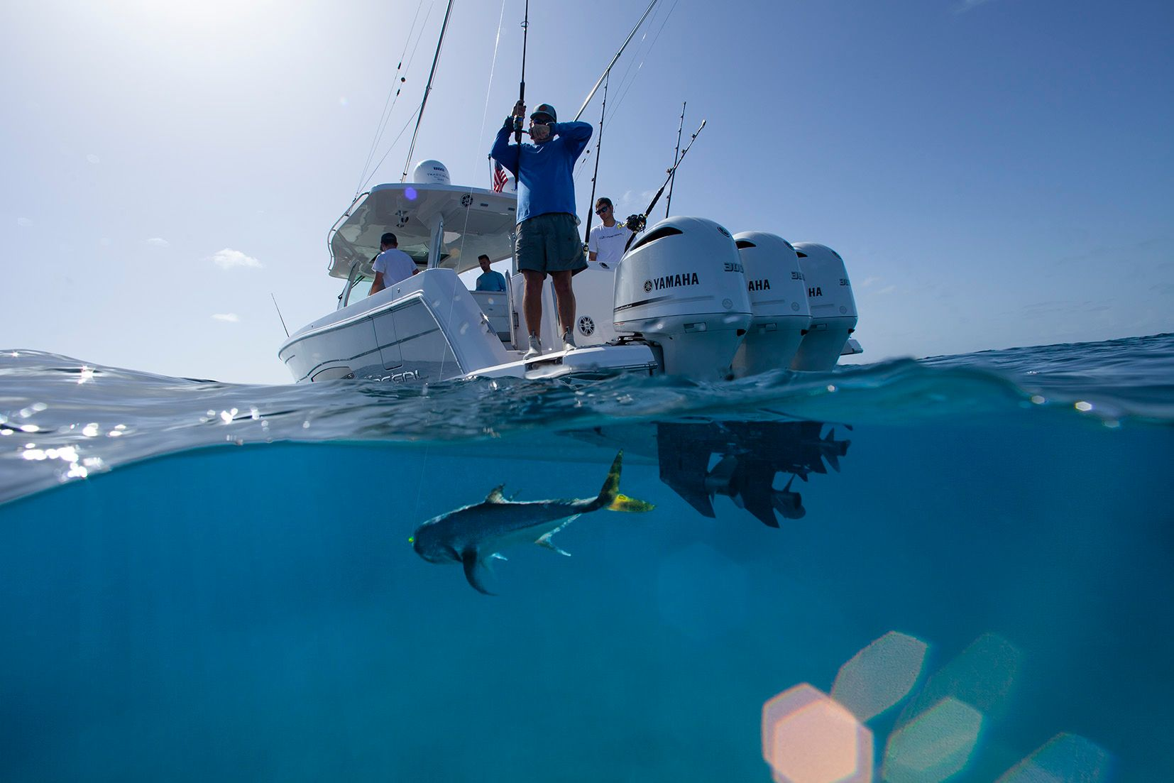 Regal Bahamas Underwater Fish
