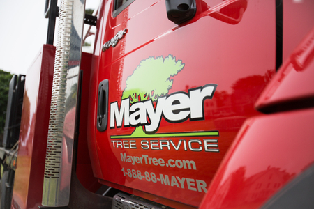 Web_Mayer_Tree_49A0587.jpg