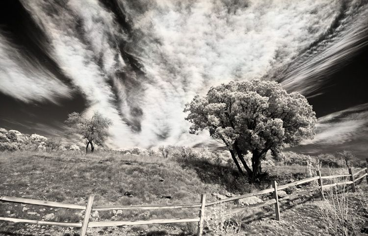 1Tree_w_clouds_IR.jpg