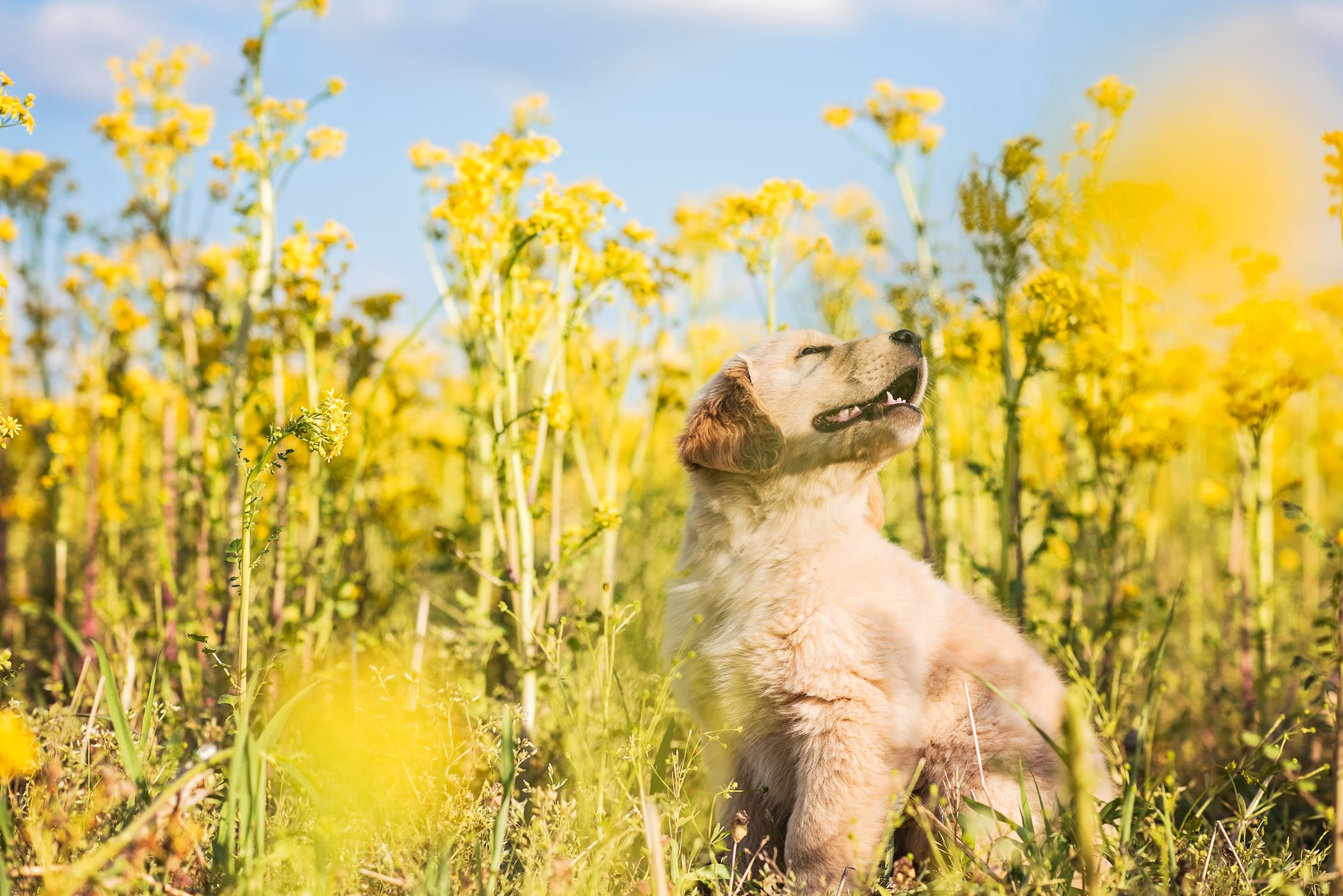 puppy portrait in flowers.jpg