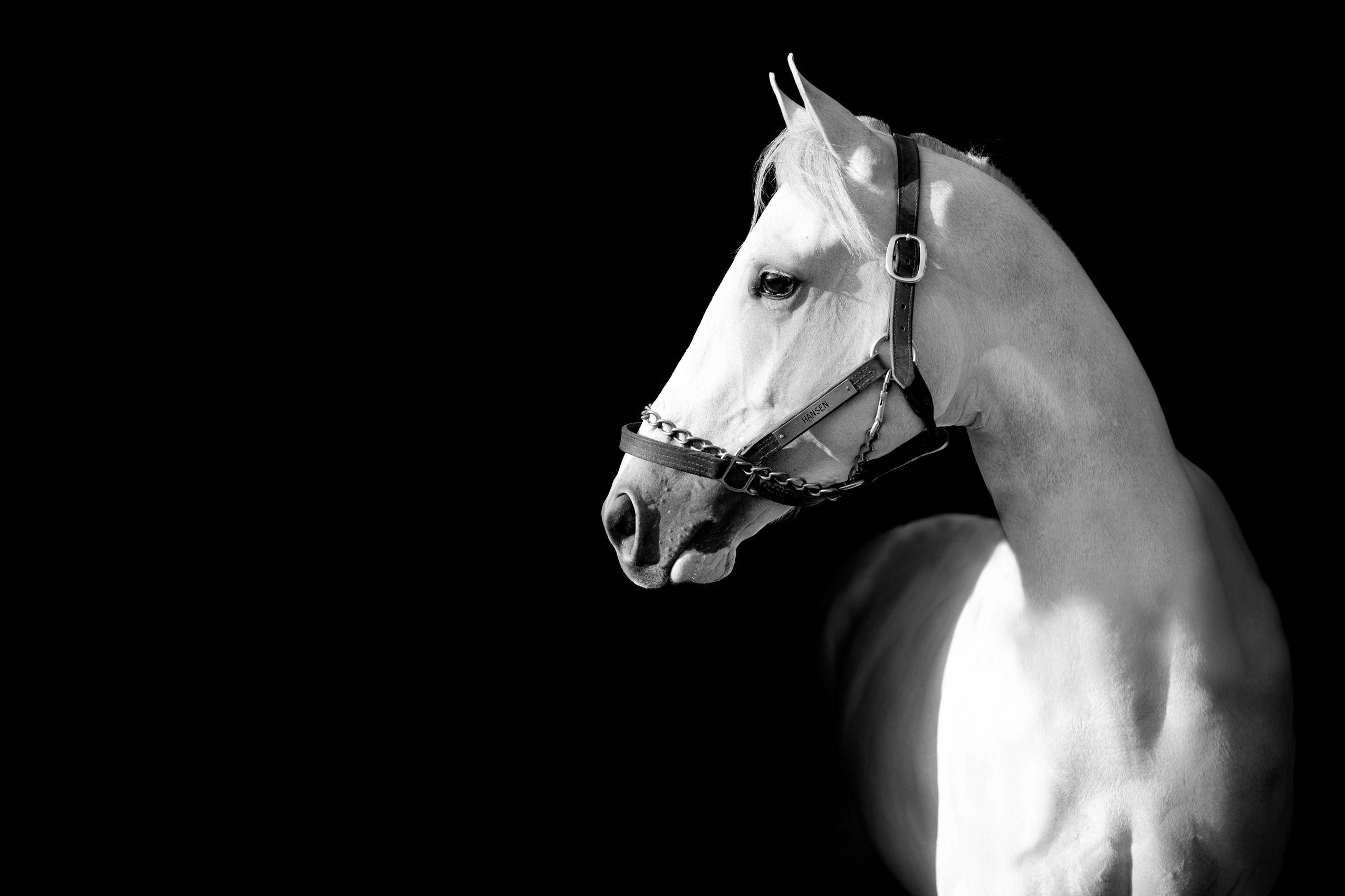 Grey-Horse-Head-Portrait-Kentucky.jpg
