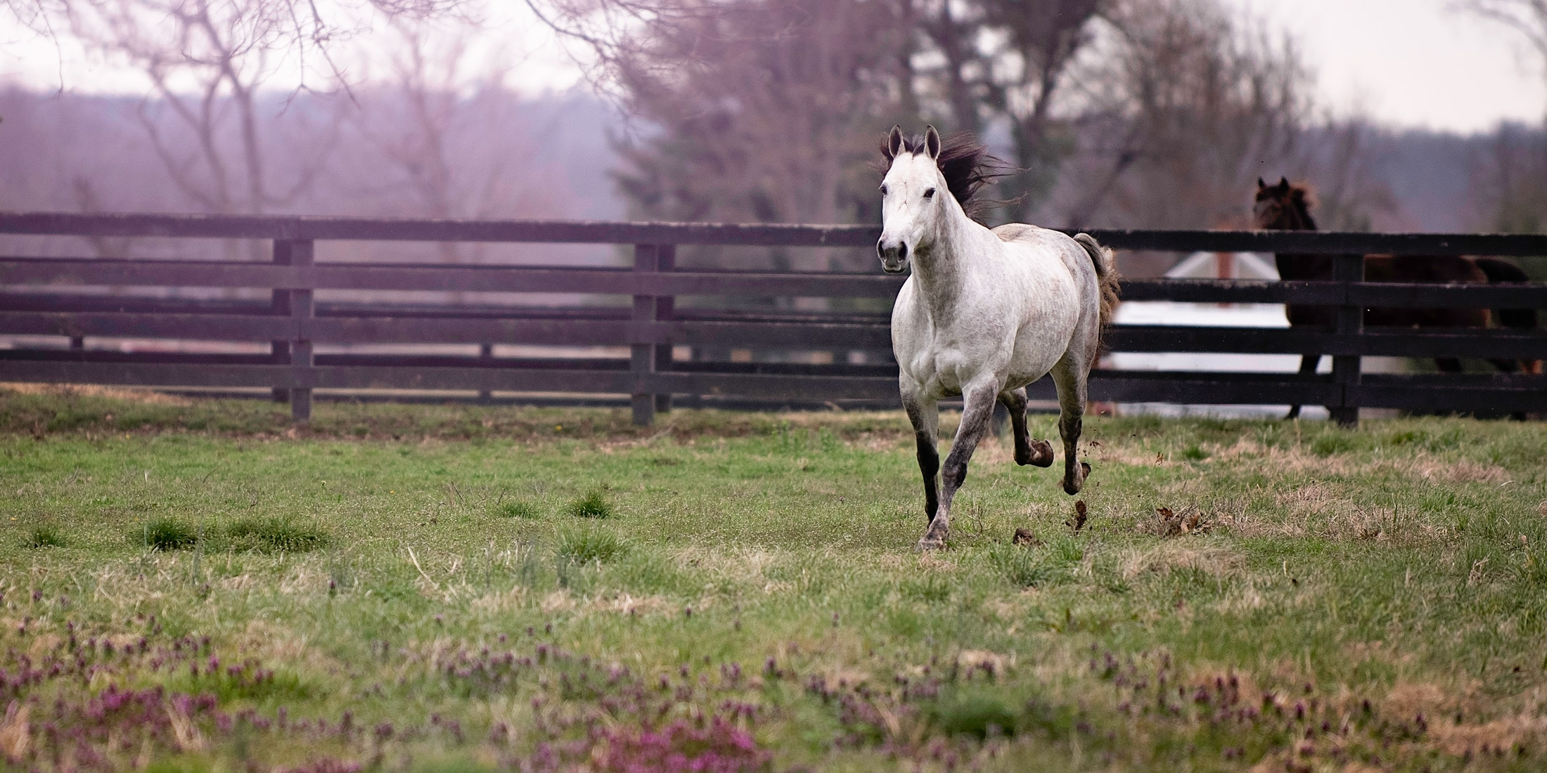 Willow-Horse-Running-Equine-Photography.jpg