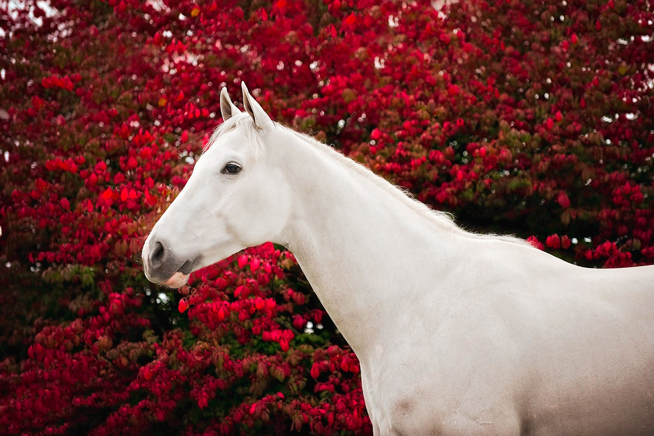 Kentucky-horse-with-flowers.jpg