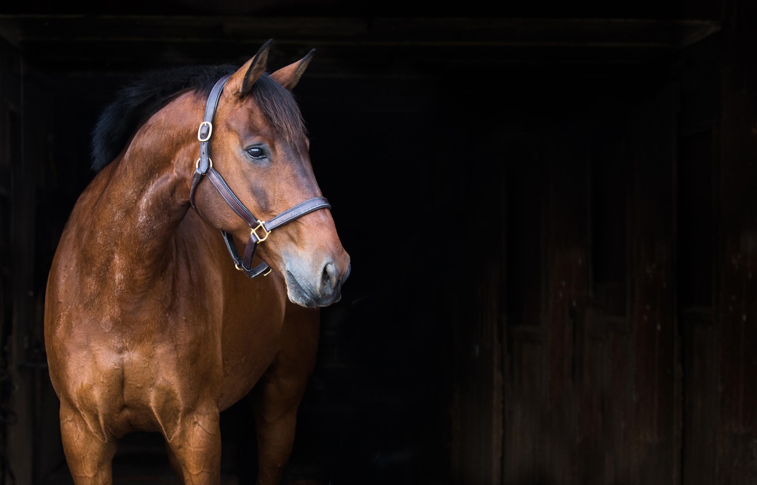 Fred-horse-equine-portrait.jpg