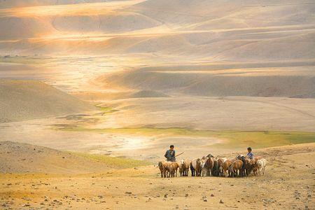 1Afghanistan_boy_shepherds