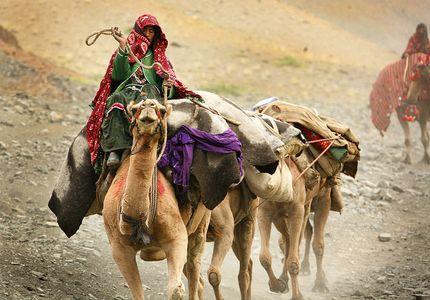 1Camel_rider_Afghan