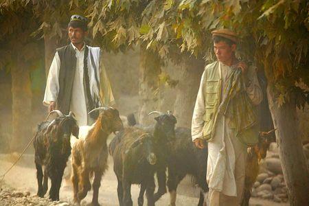 1afghan_goat_walkers