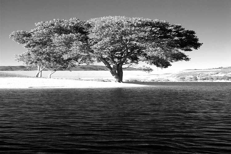 1tree_by_the_lake_shore