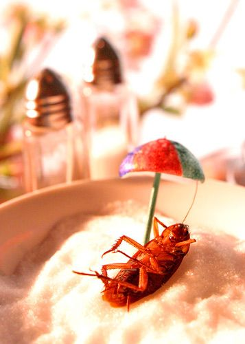 1cockroach_in_sugar
