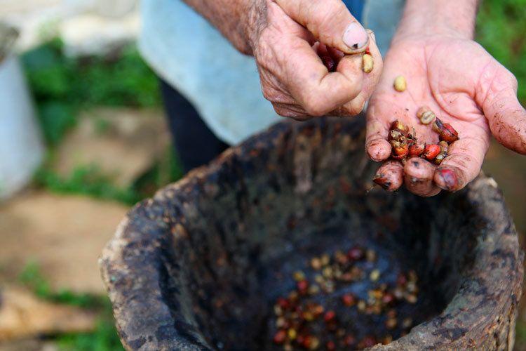 1cuba_coffee_farmer_havana_vinales_valley_havana_doria_anselmo___1
