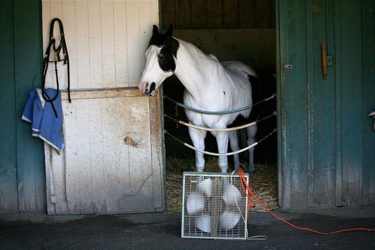 1r9_Santa_Anita_horse_races
