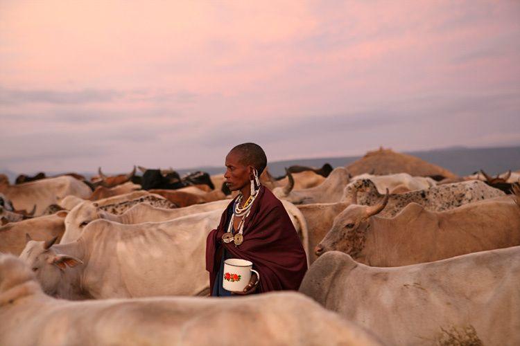 1woman_cows