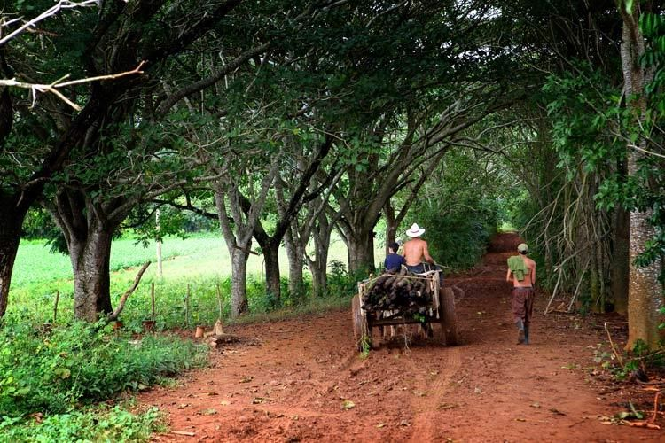 1cuba_havana_vinales_valley_farmer_ox_back_doria_anselmo___1__1_