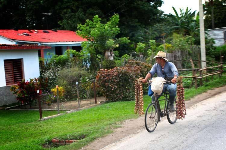 1cuba_havana_bike_garlic_people_doria_anselmo___1