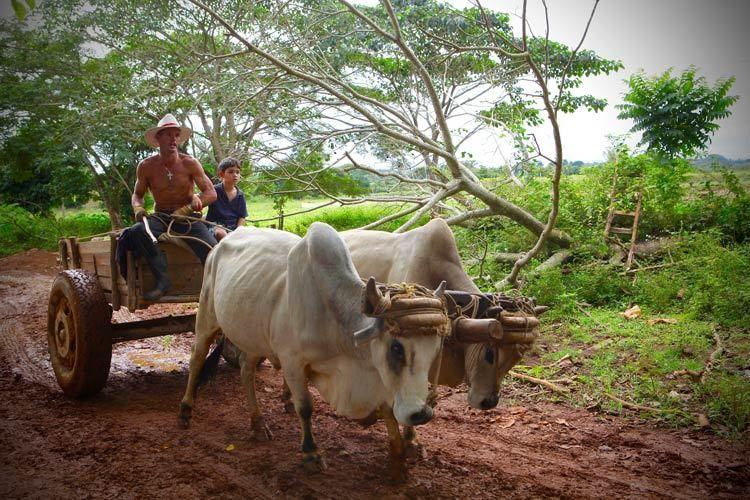 1cuba_havana_vinales_valley_farmer_ox_doria_anselmo___1