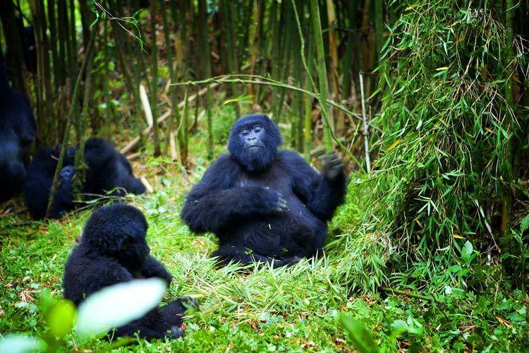 1r3_Rwanda_gorilla_photobydoria_Doria_Anselmo