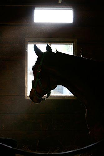 1r10_Santa_Anita_horse_races