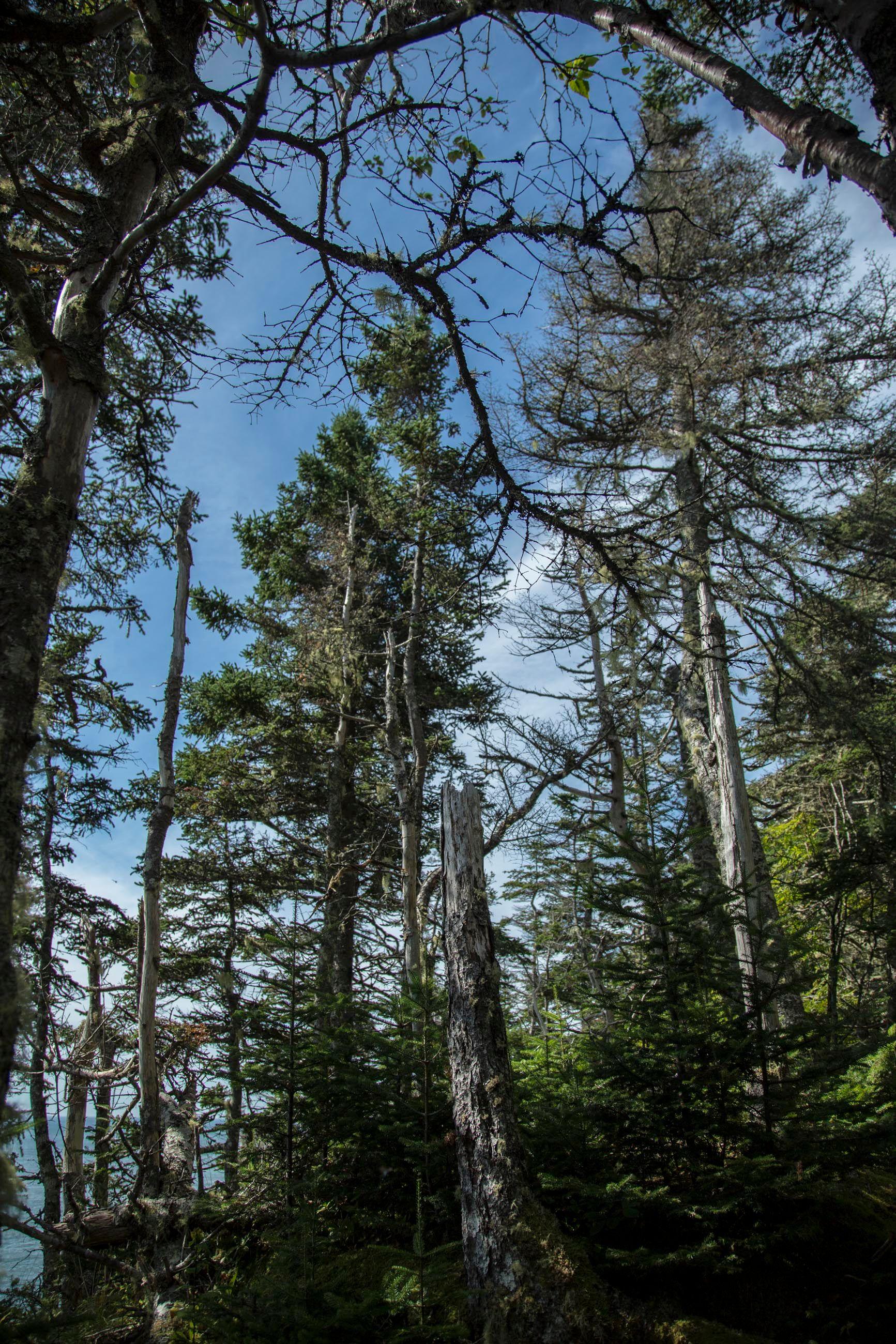 Quoddy Head state park. Lubec, ME USA