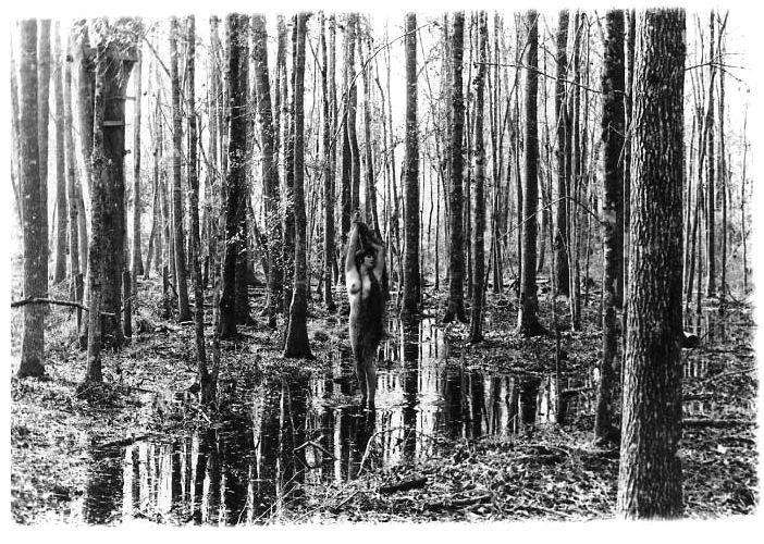 1florida_swamplands__05