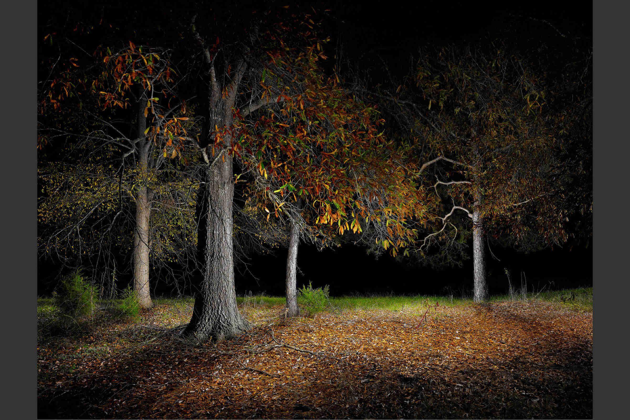 Landscape #5 by Harold Ross