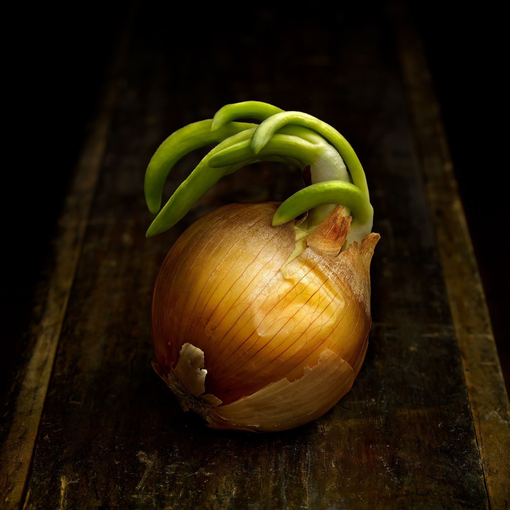 Onion Sprout by Harold Ross