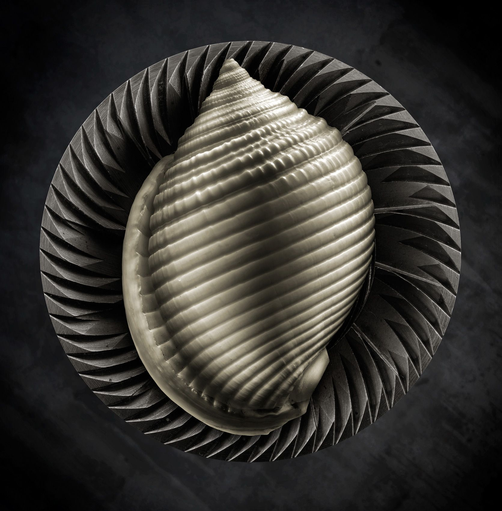 Shell Study #3 by Harold Ross