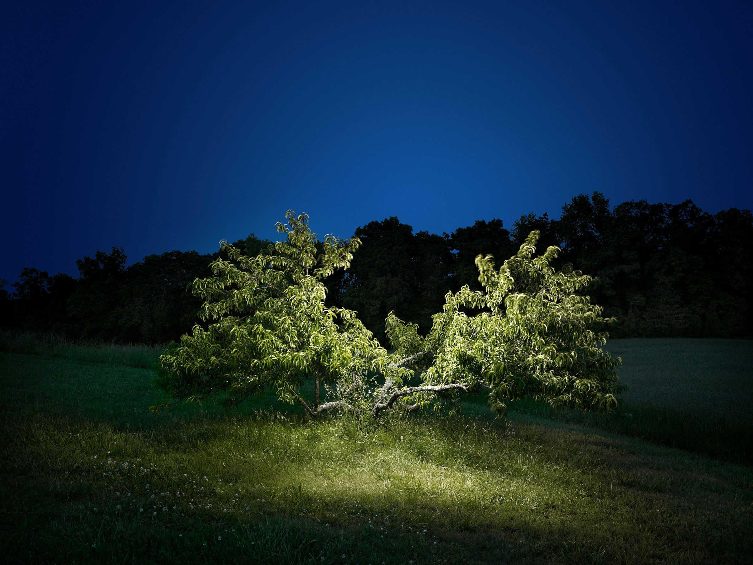 Landscape #4 by Harold Ross
