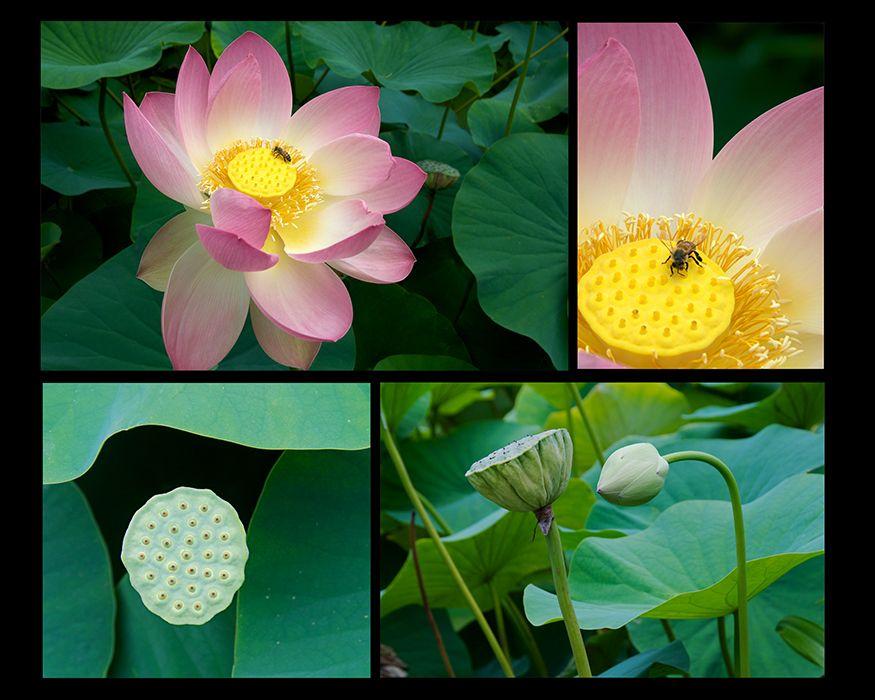 Web-Lotus-7.jpg