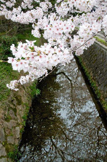 4_1_514_1web_japan_kyoto__04.jpg