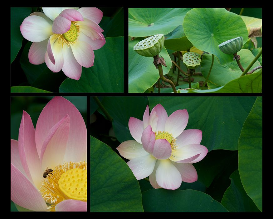 Web-Lotus-1.jpg