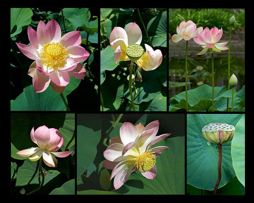 Web-Lotus-6.jpg