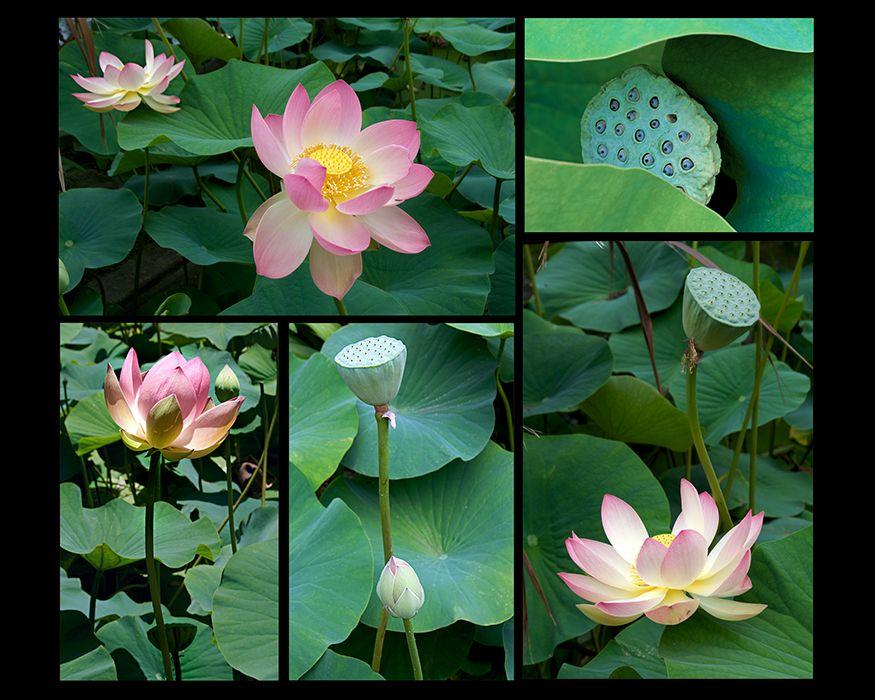Web-Lotus-5.jpg