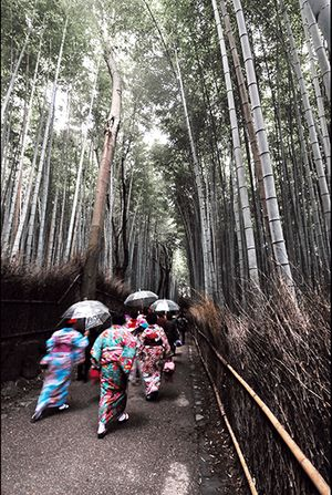 Web-Japan-Bamboo-Forest.jpg