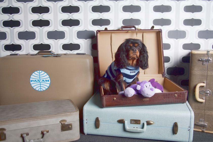 1IMG_suitcasedetails.jpg