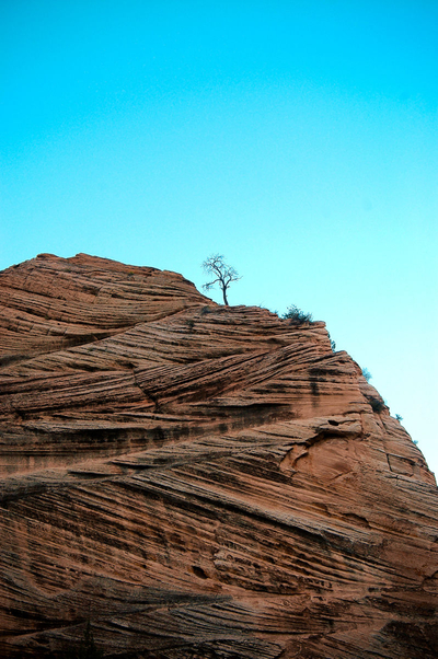 Lonely TreeZion National ParkUtah, US