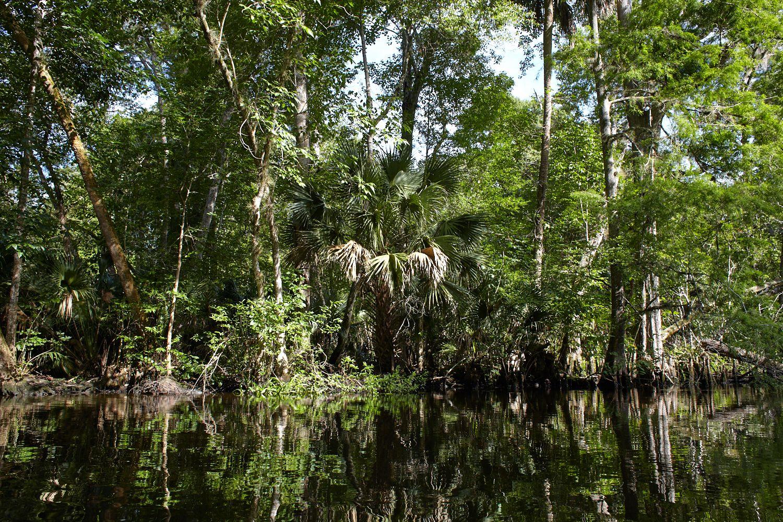 Ocklawaha River, Fort McCoy, Florida