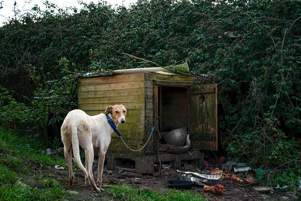 9-Lurcher and his House.jpg