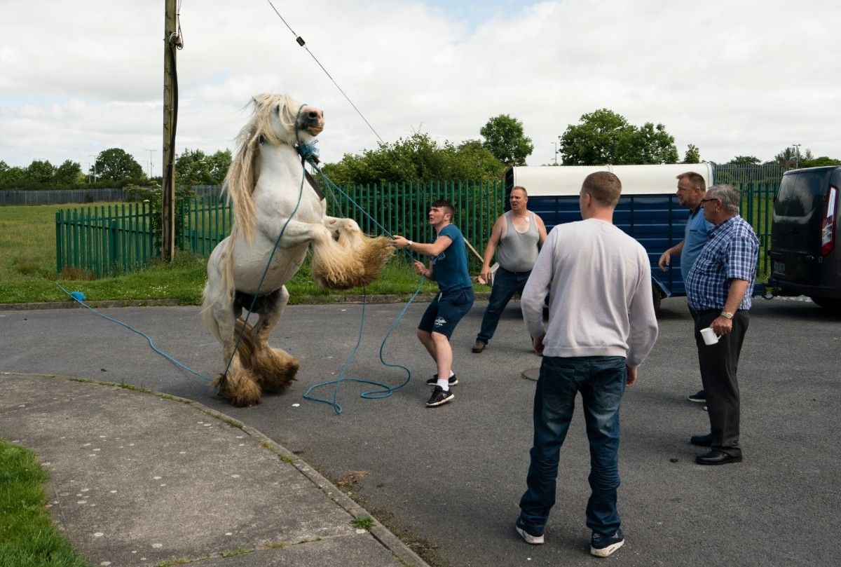 17-Rearing Horse.jpg