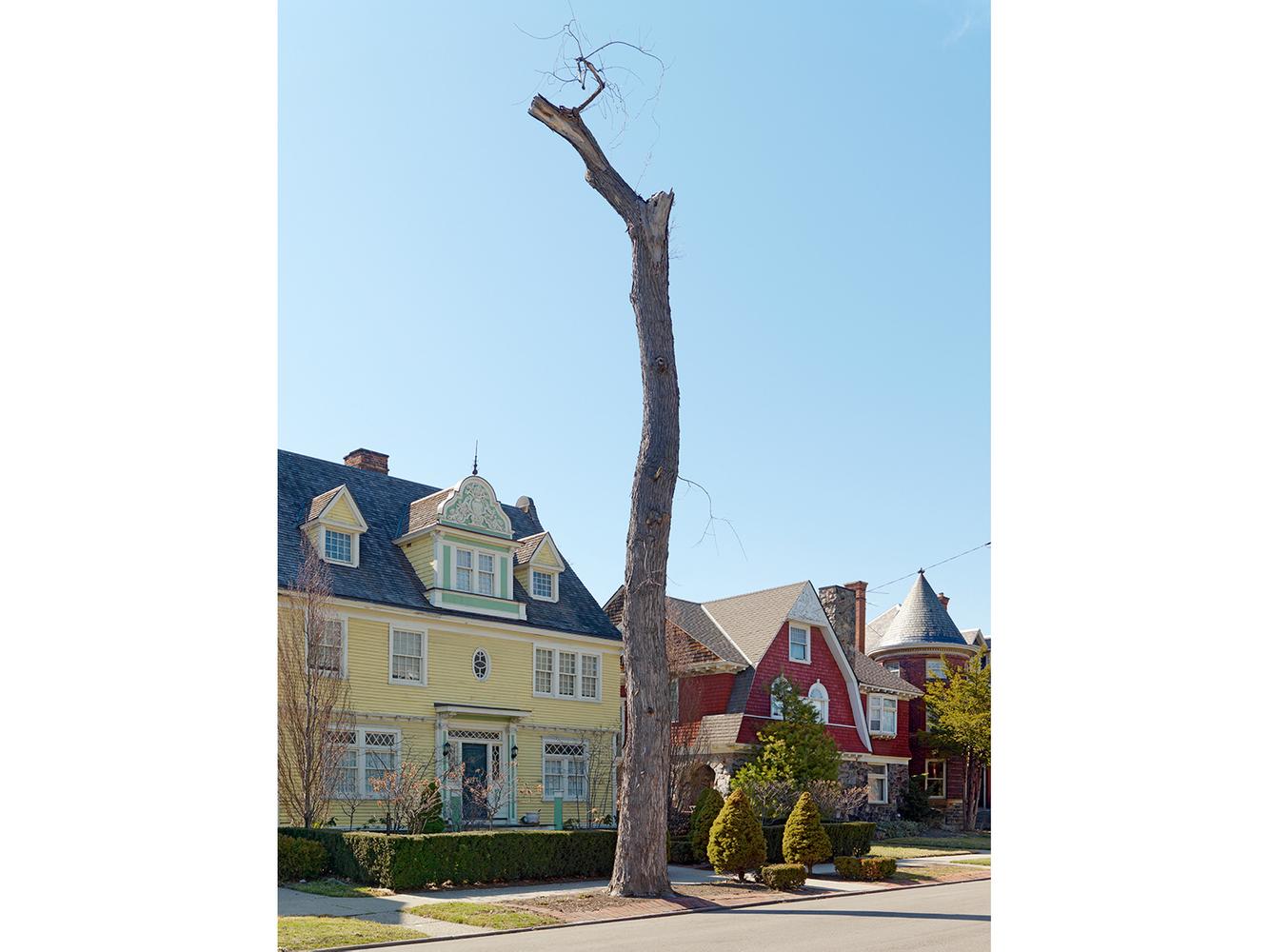 Tree Stump 42, Detroit 2013