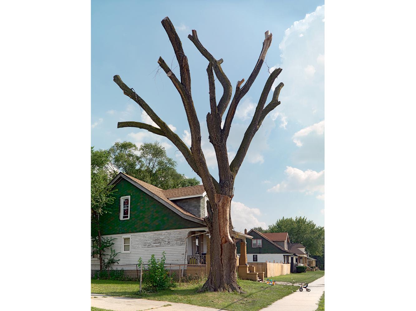 Tree Stump 36, Detroit 2012