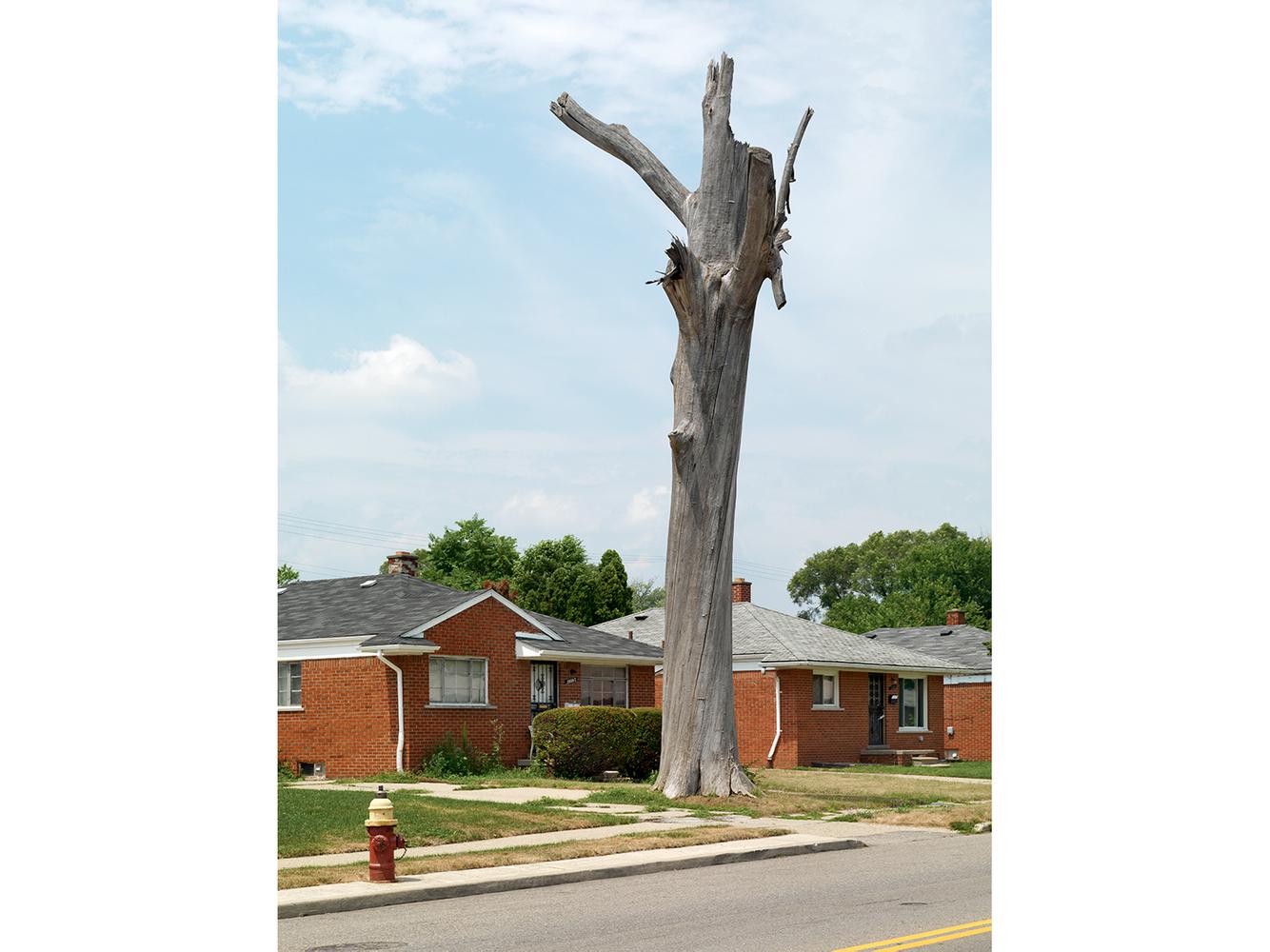 Tree Stump 1, Detroit 2010