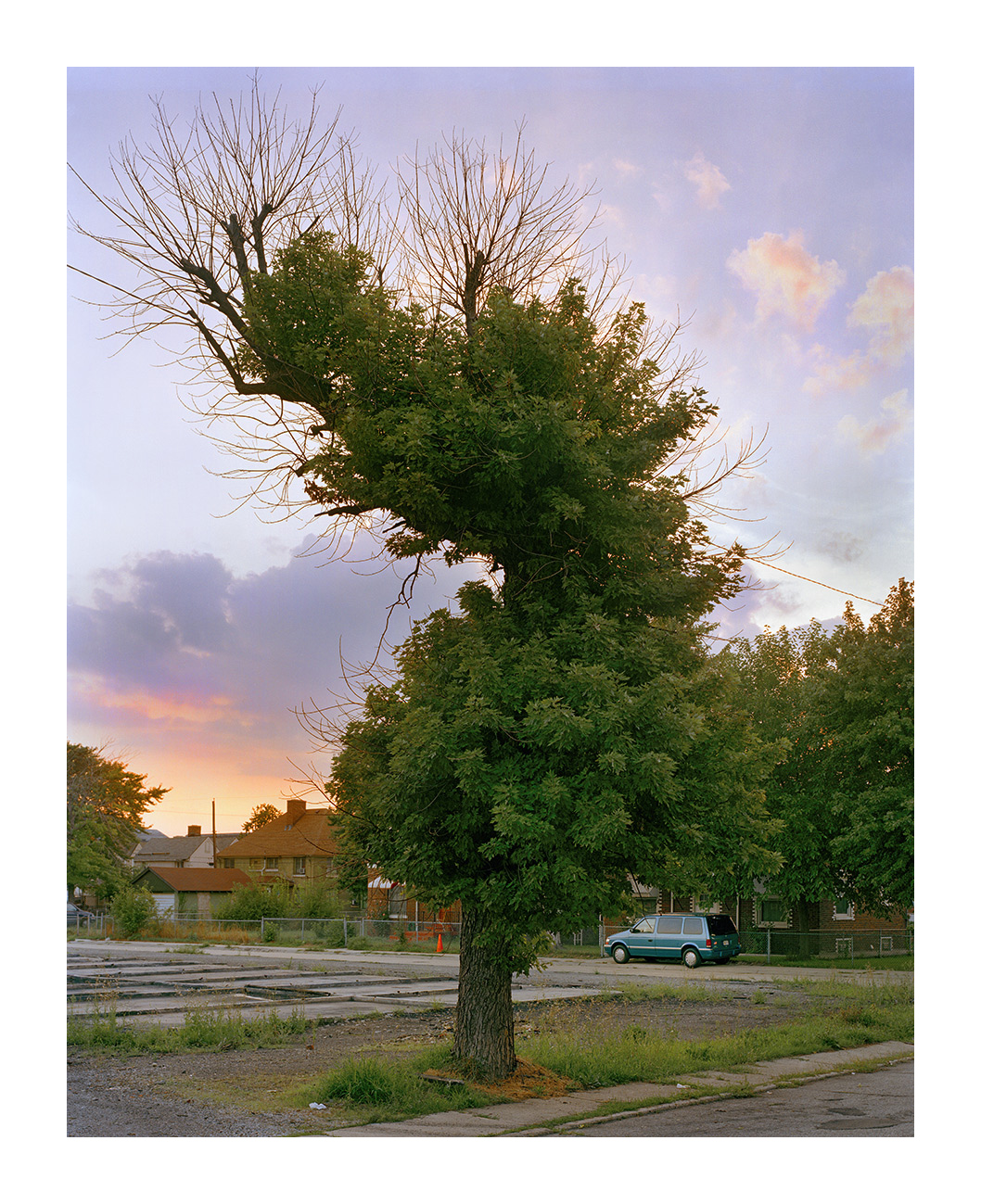 Fire Damaged Tree, Marktown, East Chicago IN 2003