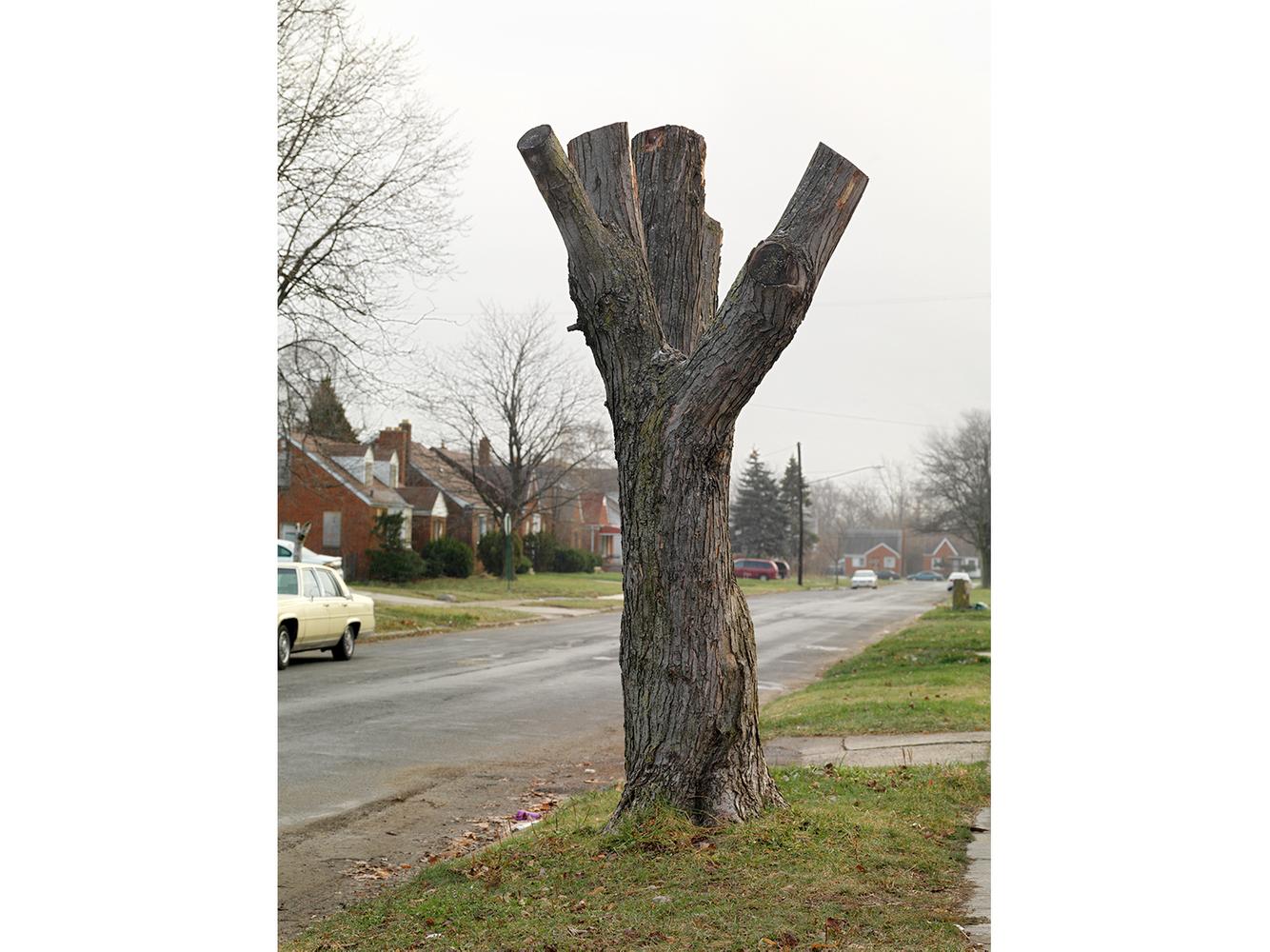 Tree Stump 22, Detroit