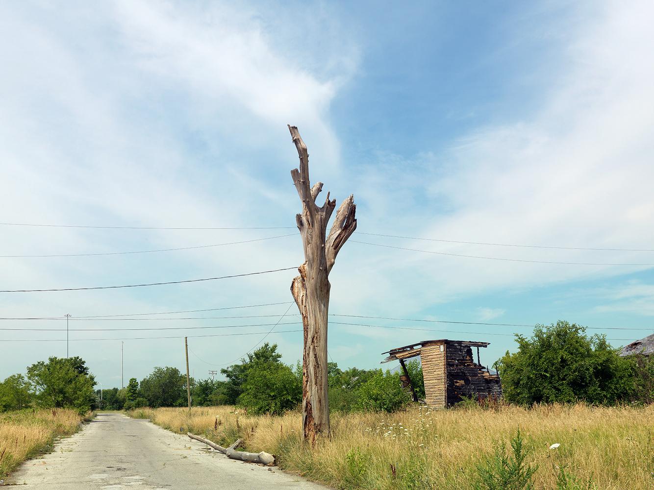 Tree Stump 5, Detroit 2012