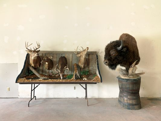 Taxidermist Showroom, Kane, IL 2008