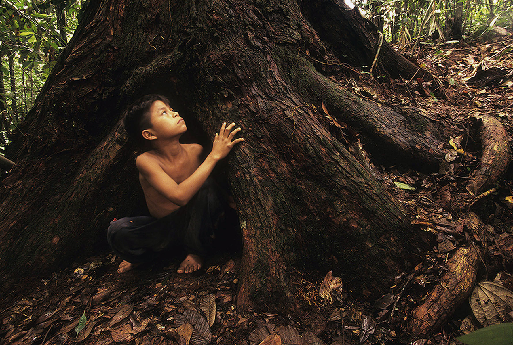 Looking to the future in the rainforest